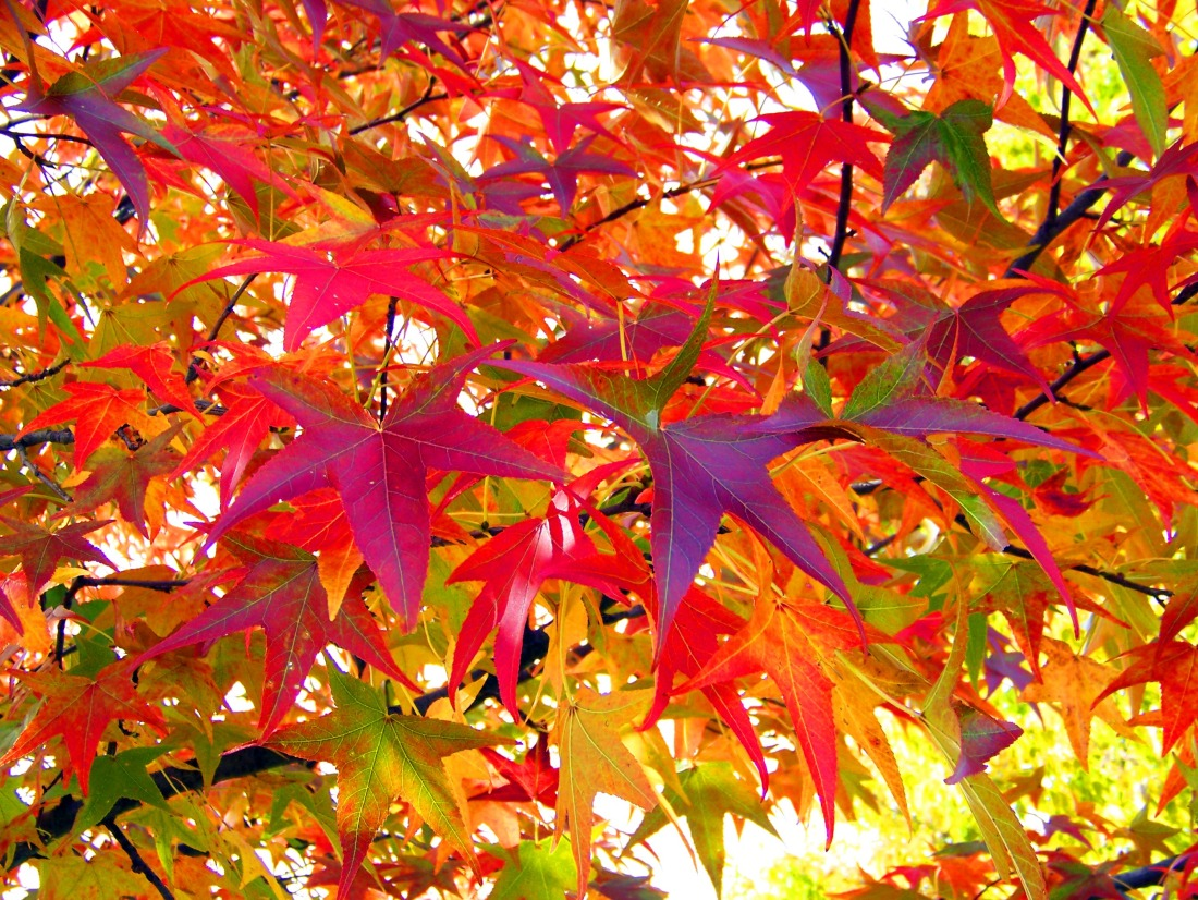 autumn_leaves_196054.jpg