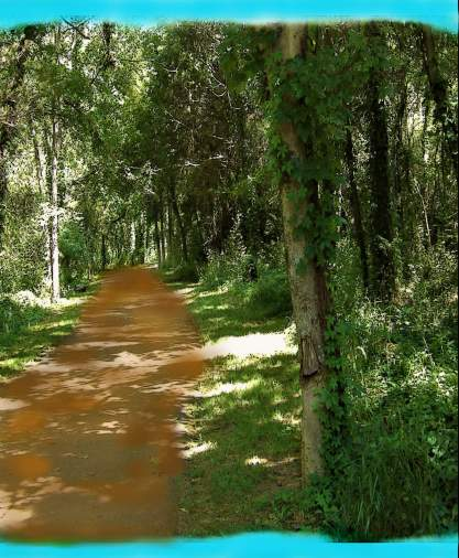 medievalforest